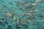 Many many fish
